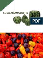 3.-KERAGAMAN-GENETIK.pptx