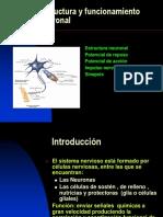 Estructura y Funcionamiento Neuronal.3 Medio