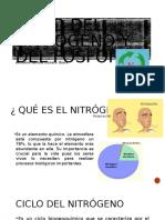 Ciclo Del Nitrogeno y Del Fosforo
