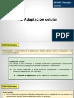 1.3 Adaptación Celular