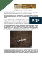 Mastigoproctus Giganteus, El Mejor Arácnido Mascota