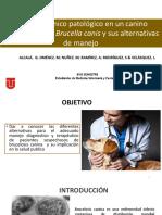 Brucella Canis Finalxx