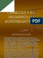 chinecas.pdf