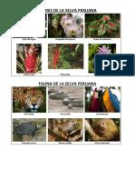 Flores y Fauna de La Selva Peruana
