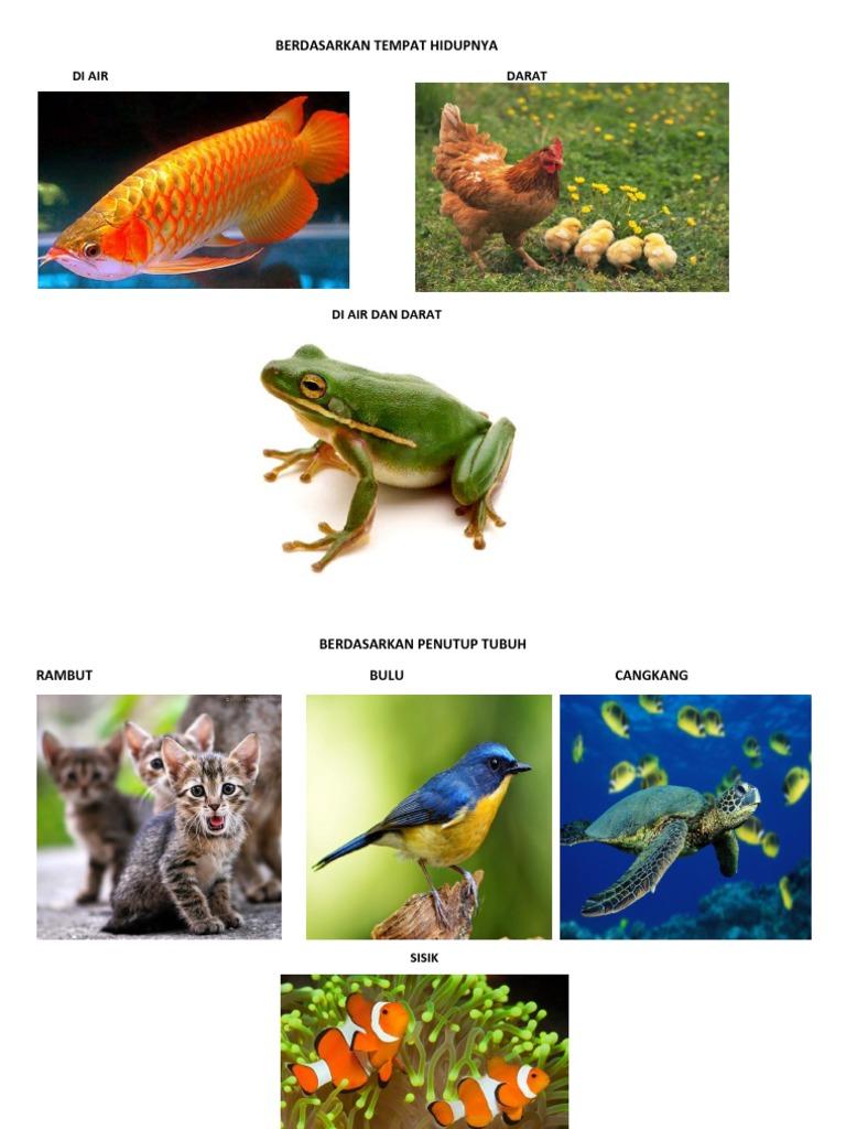 4100 Gambar Hewan Berdasarkan Tempat Hidup Gratis Terbaik