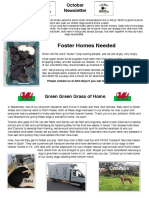 APA Newsletter October Edition