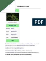 Trochodendrales 1