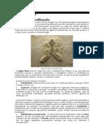 paleontologia - fosseis