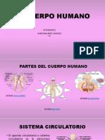 El Cuerpo Humano 2