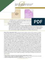 Bacilliformis pdf bartonella