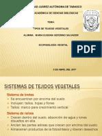 Clase 09 - Tejidos Vegetales