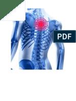 Espalda Osteo