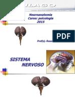 NEUROANATOMIA PSICOLOGIA 2017.pptx