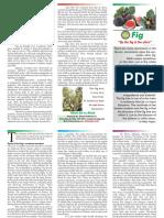The Fig.pdf