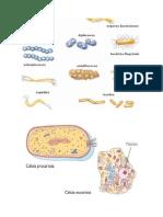 Imagen biologia