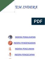 Bab 13. Sistem Indera