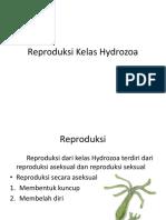Reproduksi Kelas Hydrozoa-1.pptx