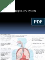 Kul. Respiratory System