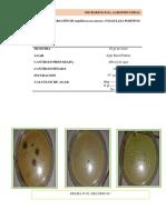 practica-06-numeracion-de-staphilococcus-aureus-coagulasa-positivo.docx
