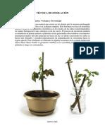 Técnicas e Instrucciones Para La Clonación de Plantas