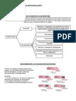 Preinforme - Actividad Anticoagulante