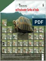 Traffic Species Reptiles14