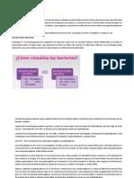 Marco Teorico y Discuciones Informe 2 Lab Microbiologia