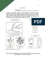 Cupressaceae.pdf