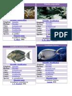 2o Spesies Ikan Jane