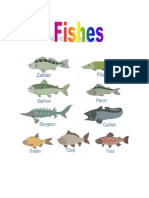 Fish Birds