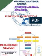 funciones bioca