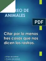 Rastreo de Animales