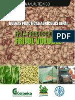 Manual tecnico de frijol.pdf