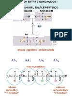 2. Estructura Proteínas