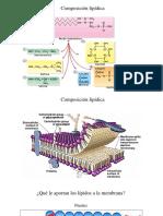 Seminario 1 I Transporte a través de membrana UPAO 2017 10.Pptx