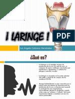 cartilla Laringe