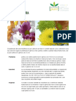 Crizantema_Multiflora ghid.pdf
