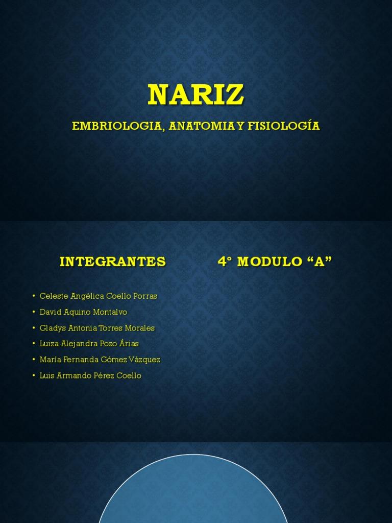 Embriologia, Anatomia y Fisiologia de La Nariz