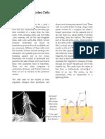 cnidocyte article final