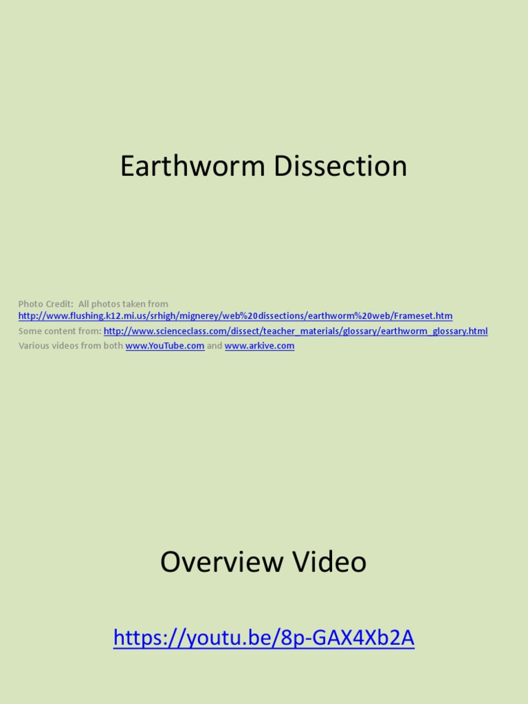 Lesson 8 - Earthworm Dissection Ppt | Animal Physiology | Organisms