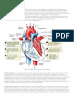 Fases Del Ciclo Cardíaco