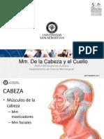 Mm Cabeza y Cuello DBIO 1056 201720