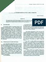 Tipologia Morfosintactica del Timote