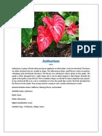 Anthurium.docx