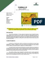 Ficha CABALLOS _equus Caballus