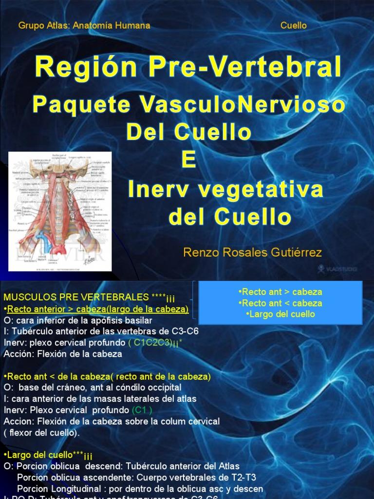 Anatomia Grupo Atlas Clase 3 Region Prevertebral e Inervacion.
