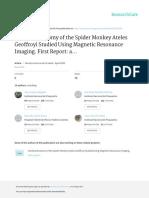Cerebral Anatomy of the Spider Monkey Ateles Geoff
