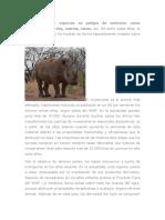 Existen muchas especies en peligro de extinción como caimanes.docx