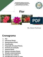 aula flor