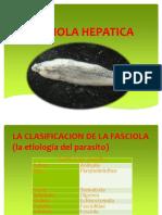 CLASE 15-FASCIOLA HEPATICA.pptx